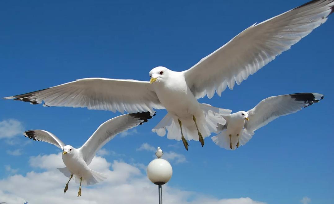 чайки над городом