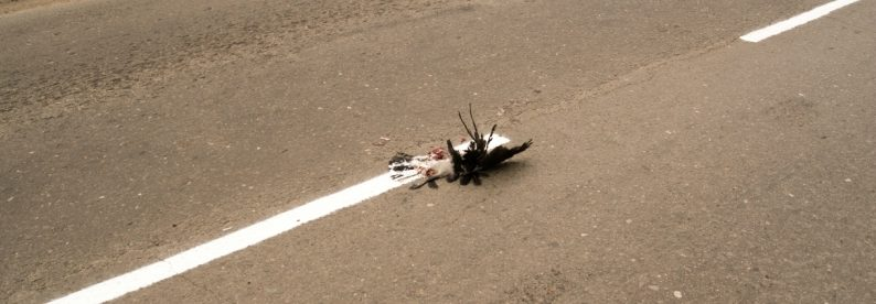 погибшая птица