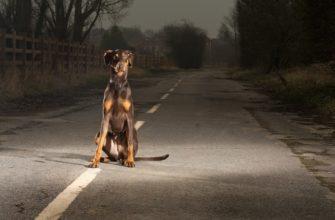 пес на дороге