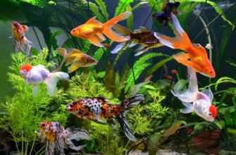 Аквариум с рыбками по фэн-шуй — лучший талисман богатства