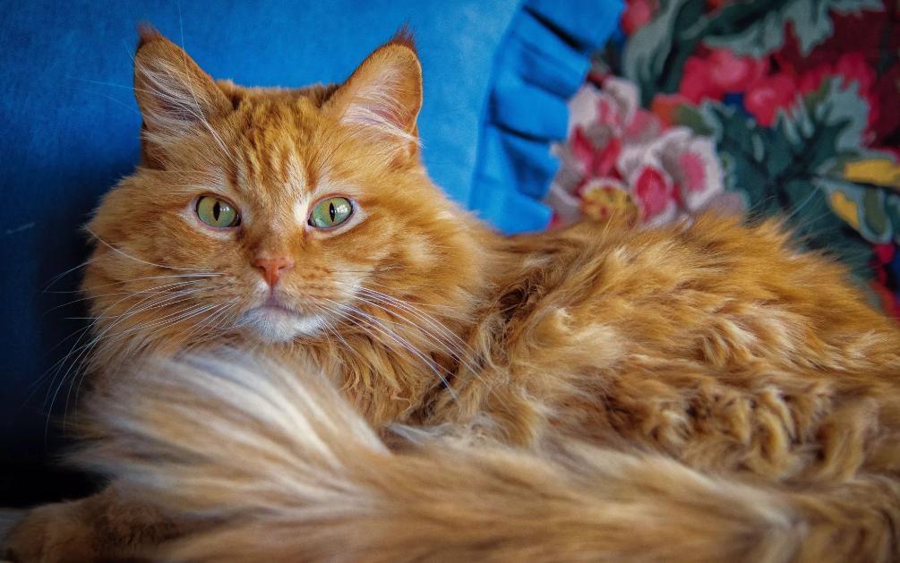рыжий котенок с зелеными глазами