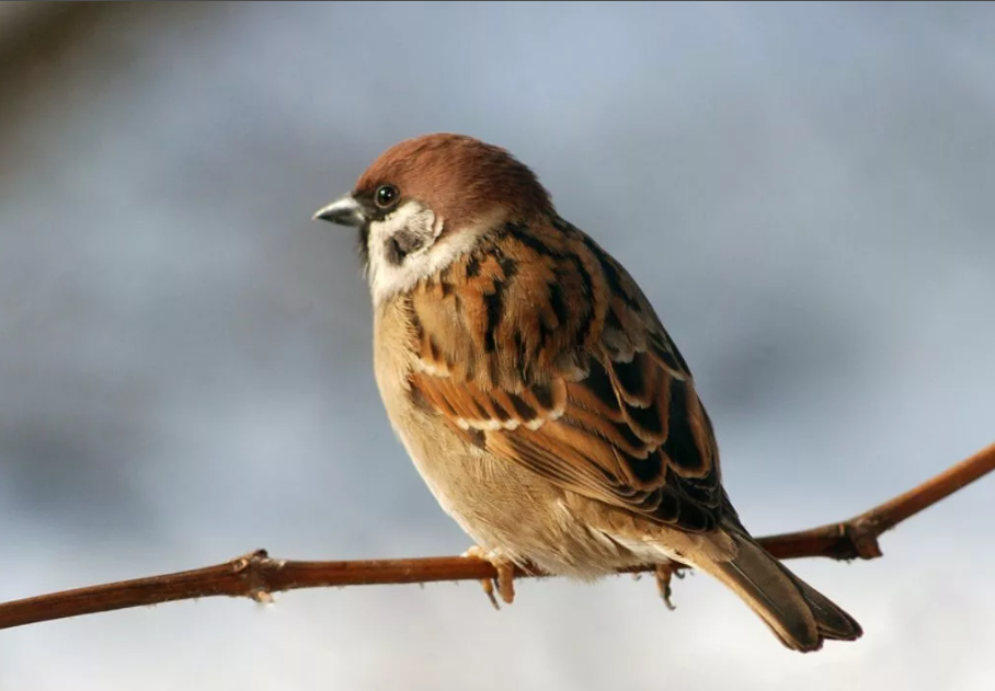 10 популярных птиц, что могут нести плохие приметы: каких птиц опасались?