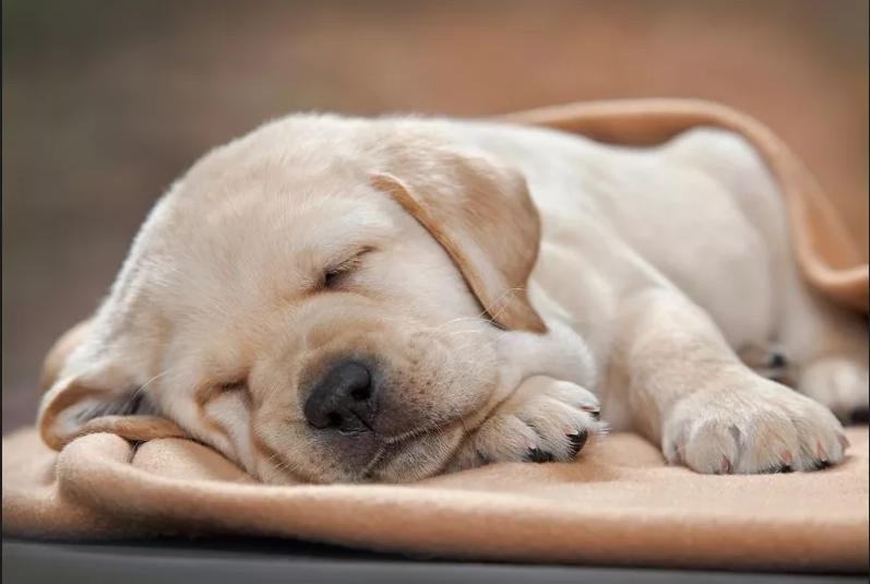 Картинки щенки милые и красивые спящие его прямо