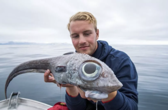 «Рыбу-динозавра» с огромными глазами поймал рыбак в Норвегии