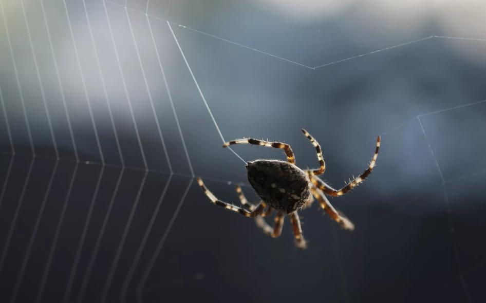паук в багажнике машины