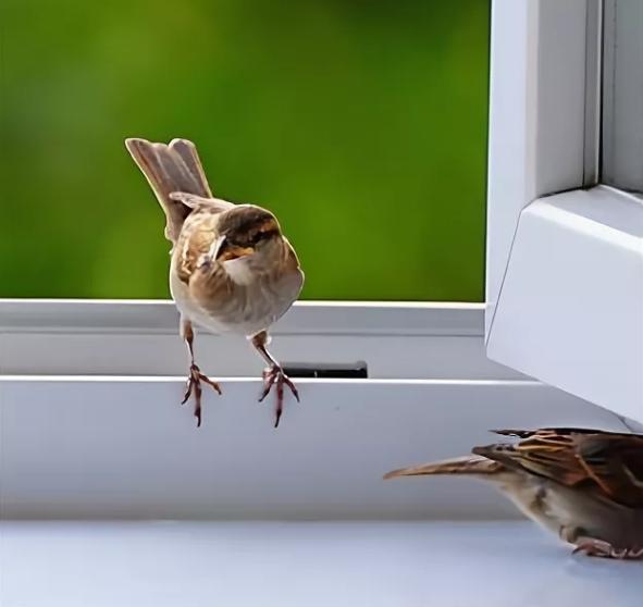 воробьи сели на окно