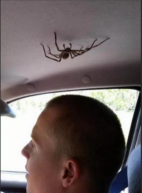 паук в машине над головой