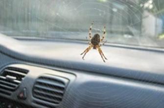 Паук в машине: к чему это, примета
