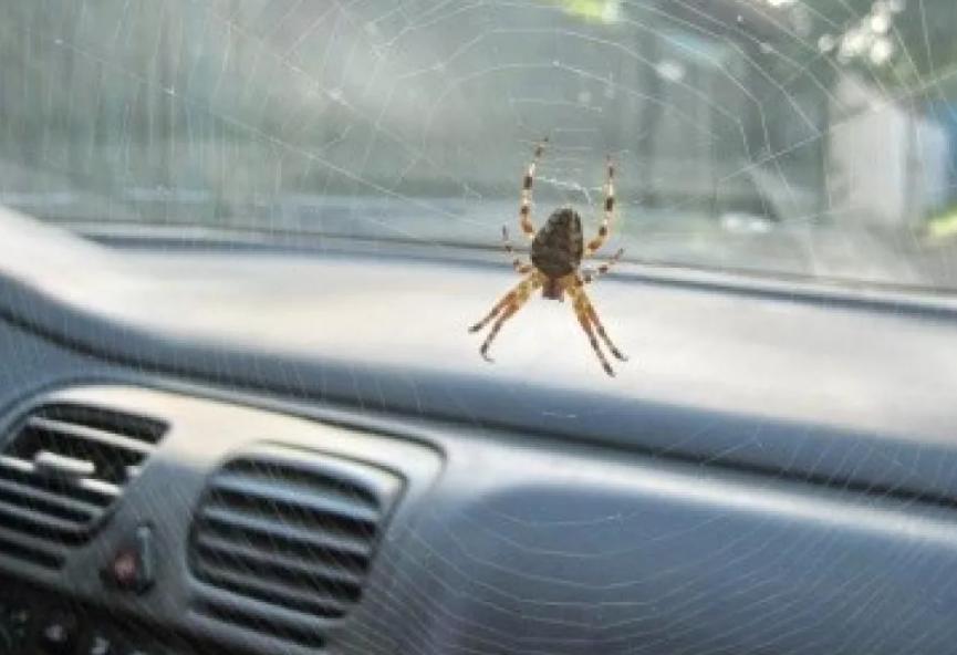 паук в машине сплелепаутину