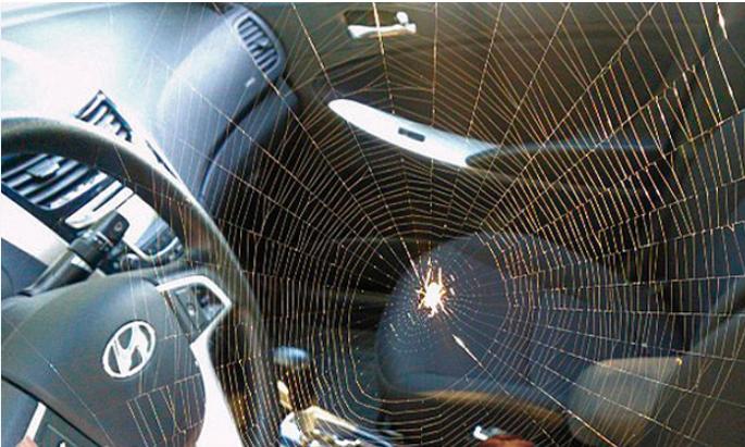 паук в машине у руля