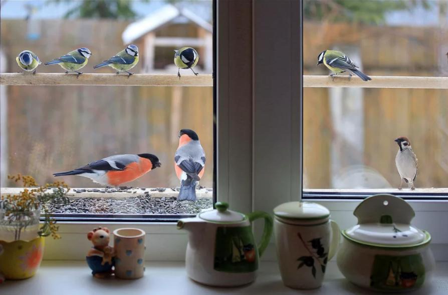 воробьи снегири и синицы на балконе за окном примета
