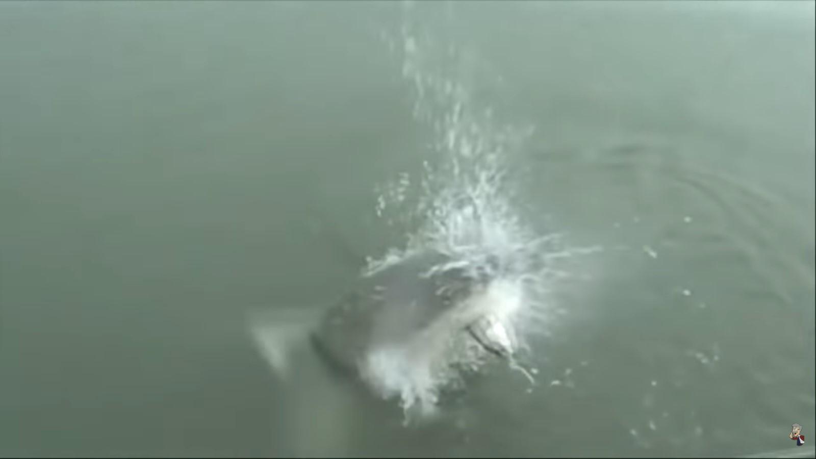 9 невероятных случаев, снятых на рыбалке