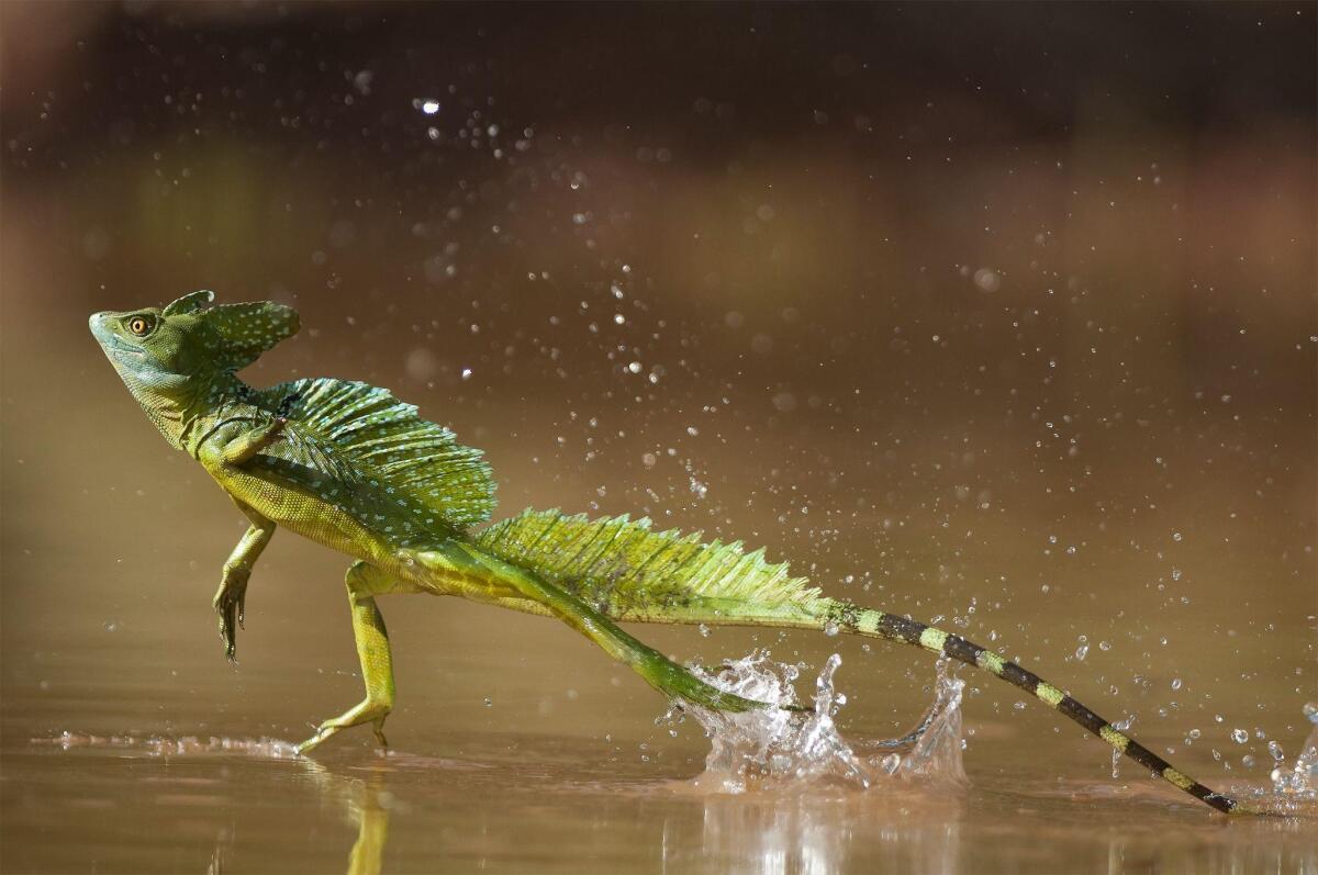 10 самых невероятных существ в мире