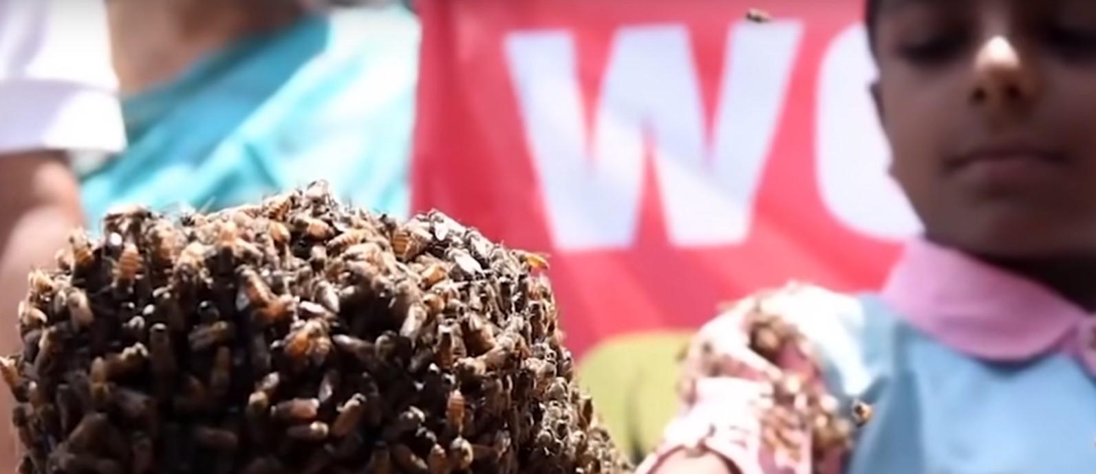 Женщина с пчелами на лице! 18 невероятных случая с животными